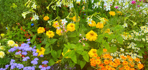 Bright flower bed in a summer park. Wide photo.