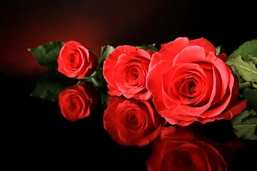 Valentine Roses laid out on a table with reflective surface