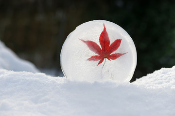 Ice sculpture with red maple lief in snow. Garden decoration concept. Selective focus.