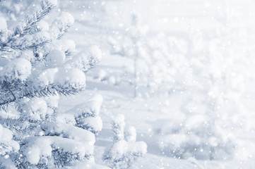 Bright winter landscape with snow-covered pine trees. Winter background.