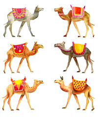 Camels in water color