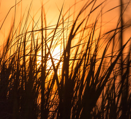 Grass in the rays of sunset as background