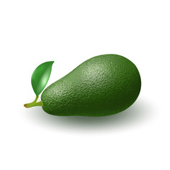 Isolated realistic colored whole juicy avocado with stick and green leaf with shadow on white background. Side view.