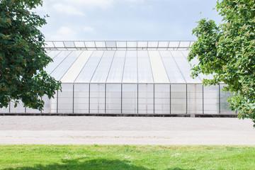 Big greenhouse in the summer sun