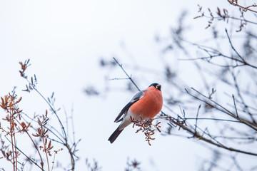 Beauiful bird at tree. Nature and fresh air.
