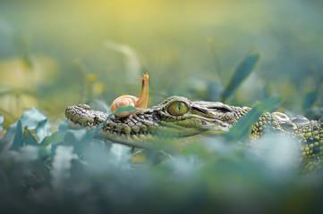 crocodile with snail