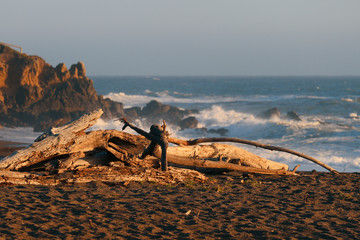 Driftwood beach in cambria during sunset with crushing waves in the background