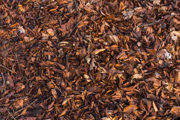 Earth ground covered with compost mulch fragment as a texture background