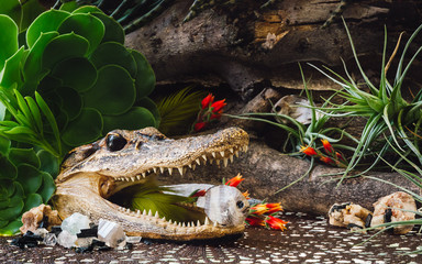 Taxidermy Alligator and Fish