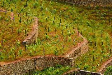 New Vineyards