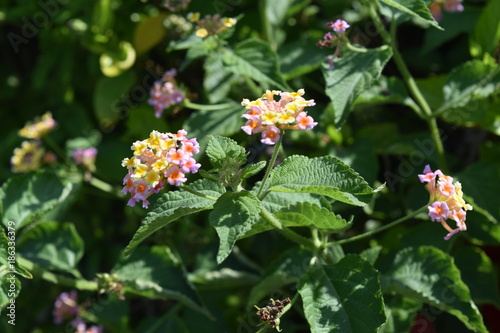 Flowers In Yellow Stock Photo And Royalty Free Images On Fotolia