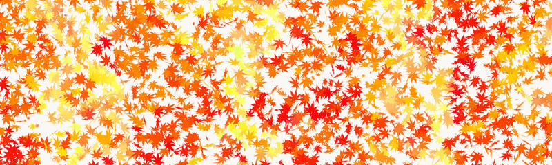 Maple autumn falling leaves