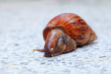 closeup snail on terrazzo floor background with copy space add text