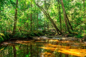 Background of rainforest and dry river