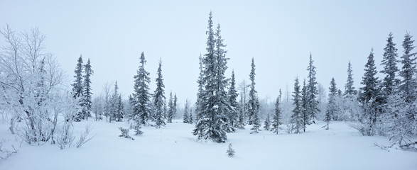 Tuinposter Wit Winter new year forest panorama spruce hoarfrost black and white