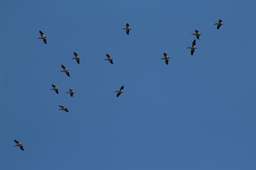 Birds in flight against blue sky