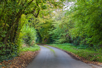 a road through green woods in early autumn in English countryside