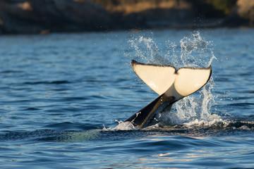 Orca Tail Water Splash