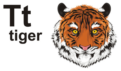 tiger, wild cat, cat, striped, animal, zoo, predator, claws, orange, roar, India, illustration, muzzle, abc