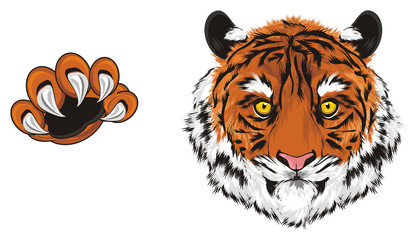 tiger, wild cat, cat, striped, animal, zoo, predator, claws, orange, roar, India, illustration, muzzle, paw