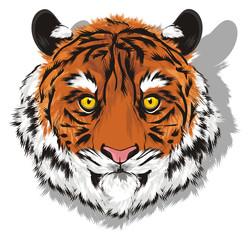 tiger, wild cat, cat, striped, animal, zoo, predator, claws, orange, roar, India, illustration, muzzle, shadow