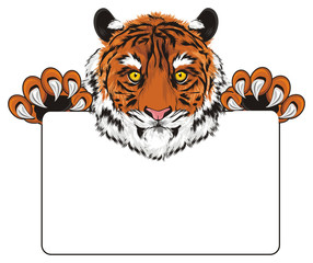 tiger, wild cat, cat, striped, animal, zoo, predator, claws, roar, India, illustration, muzzle, paws, hold, paper