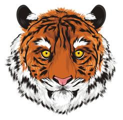 tiger, wild cat, cat, striped, animal, zoo, predator, claws, roar, India, illustration, muzzle,