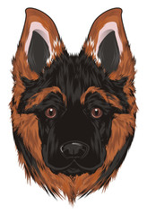 Shepherd, German Shepherd, dog, shepherd puppy, puppy, friend, pet, animal, police, illustration, muzzle, woof,