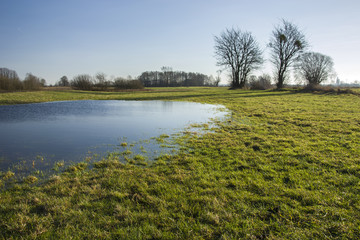 Meadow flooded with water and leafless trees.