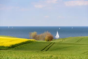Ostsee mit Segelbooten hinter einem Rapsfeld
