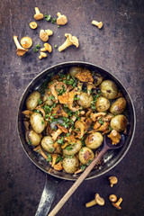 Fresh fried chanterelle with potatoes as top view in a casserole