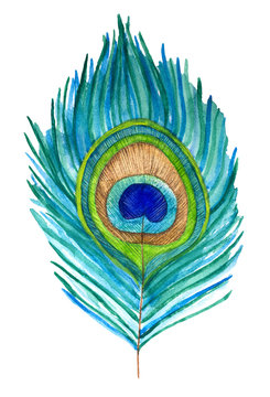 Single peacock feather, isolated. Symbol of renewal, resurrection, immortality, pure, innocent soul, love, elegance, beauty and royalty. Hand painted color watercolor illustration on white background.
