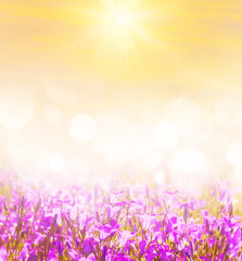 Spring bright background for design with wildflowers bells