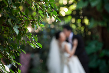 The bridegroom is kissing the bride. By have leaves are the foreground. And blurred at Bride and groom
