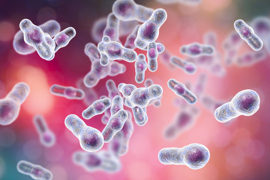 Clostridium difficile bacteria, 3D illustration. Spore-forming bacteria that cause pseudomembraneous colitis and are associated with nosocomial antibiotic resistance