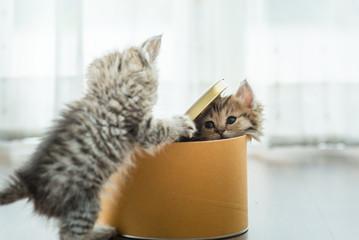 Cute kitten in box