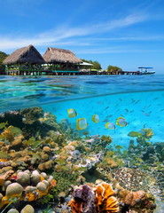 A tropical restaurant with thatched huts over the water and a thriving coral reef with fishes and a sea turtle underwater, Caribbean sea, Panama, Central America
