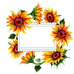 Wildflower sunflower flower frame in a watercolor style. Full name of the plant: sunflower. Aquarelle wild flower for background, texture, wrapper pattern, frame or border.