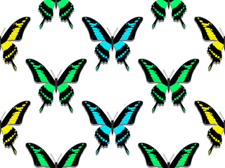 seamless pattern, butterflies of all colors of the rainbow