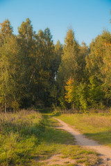 Beautiful autumn day in the park. warm sunny day in the forest. beautiful landscape in Belarus in Europe