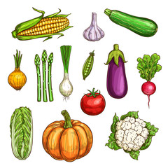 Isolated color vegetables sketches set