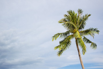 Photograph of hight coconut tree close up with the cloudy sky in background.