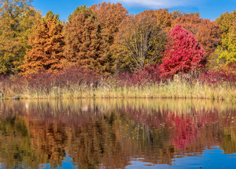 Deep Red, Orange, and Green Foliage in an Autumn Landscape Reflected in a Lake