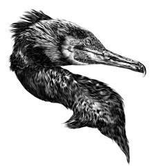 bird cormorant head sketch vector graphics monochrome drawing