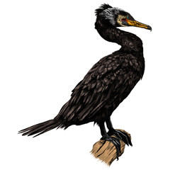 the bird is a cormorant standing at full height on a dry snag sketch vector graphics color picture