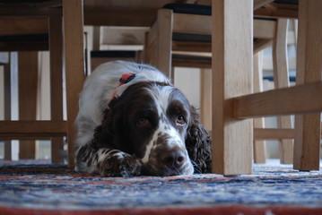 Vigga under the table