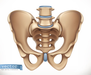 Pelvis structure. Human skeleton, medicine. 3d vector icon