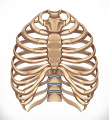 Rib cage. Human skeleton, medicine. 3d vector icon