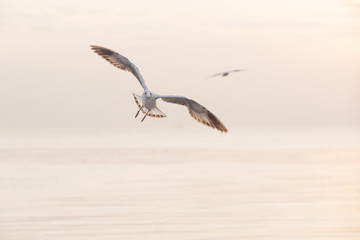 Seagull are Flying over the Sea in twilight sky sunset