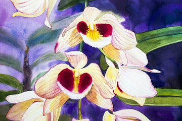 Watercolor painting  original on paper colorful of orchid flowers.